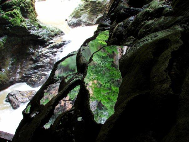 v_vodnoi_poverh_lagun_otraj_zelen