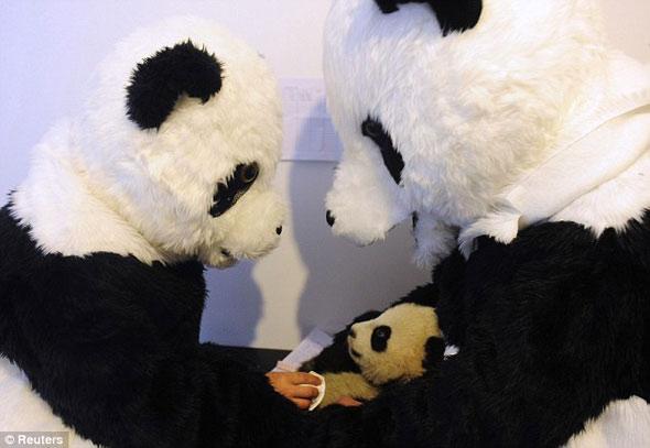 панды, ученые, китай, переодетые ученые