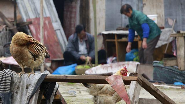 bird_market
