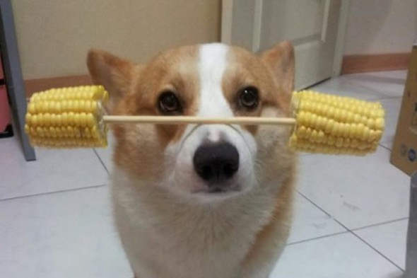 china-pet-dog-balances-differents-things-on-nose-head-preview