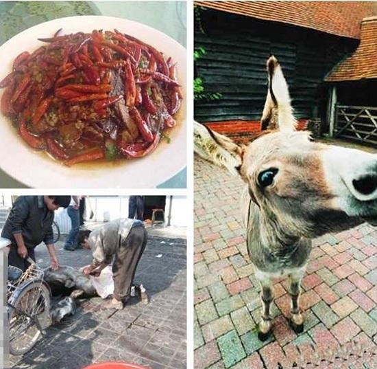 Fresh-Donkey