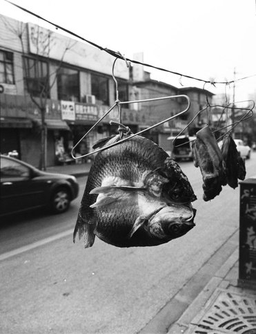 birdhead, Ji Weiyu, Song Tao, shanghai bird head, china contemporary art, china art photography