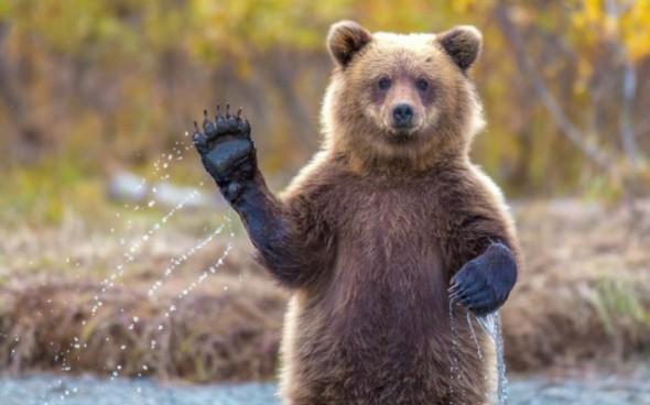 пока медведь, пока, давай пока