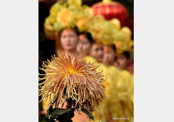 хризантемы ujhjl Кайфэн провинции Хэнань 2,500000 горшков 3
