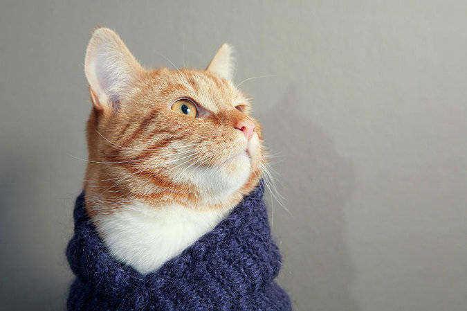 cat scarf, кот в шарфе