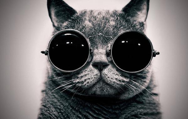 funny cat, кот в очках